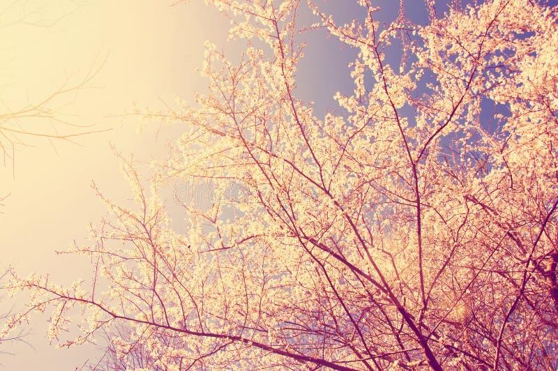 Primavera y naturaleza fotos de archivo libres de regalías