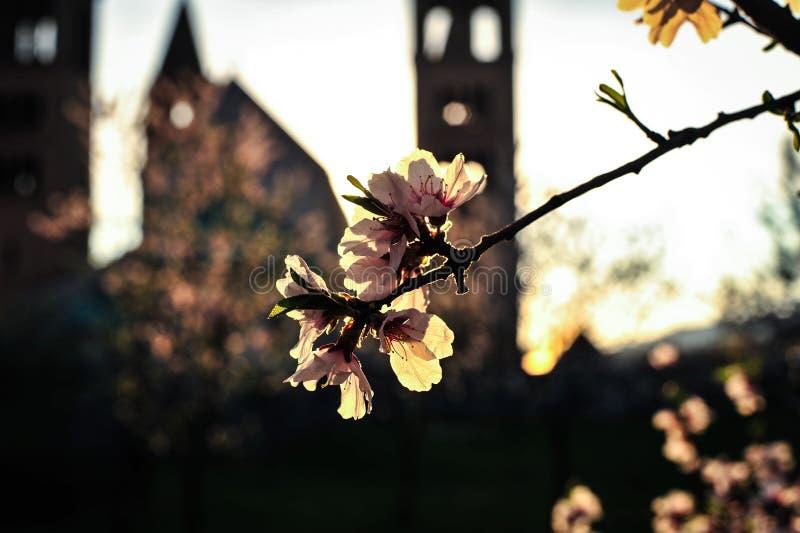 Primavera y puesta del sol fotografía de archivo