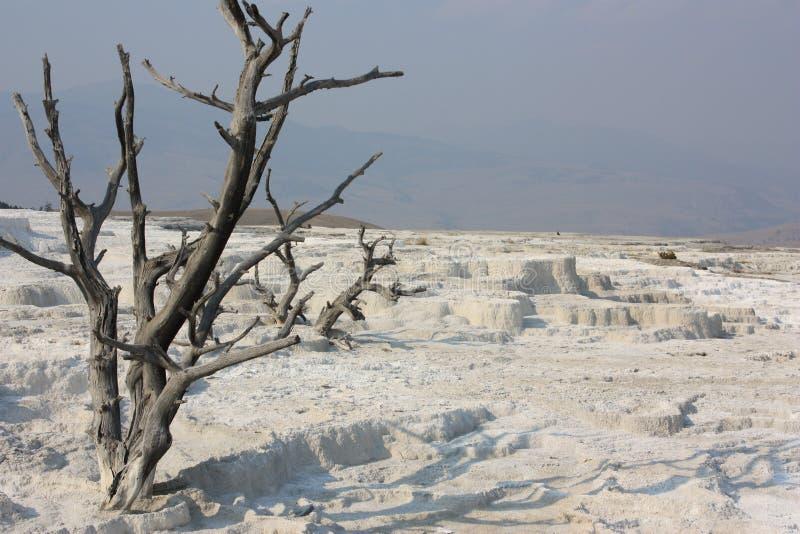 Primavere dello zolfo di Yellowstone fotografia stock libera da diritti