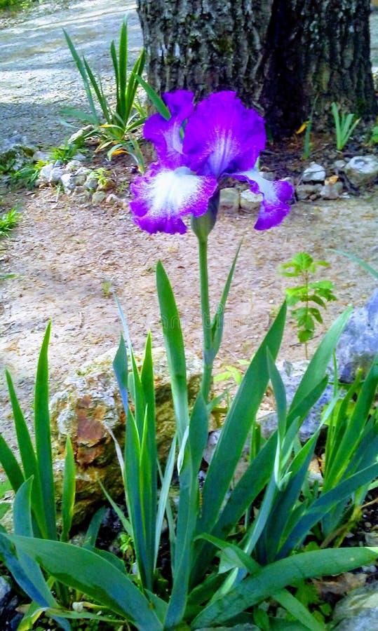 Primeira flor da mola fotos de stock