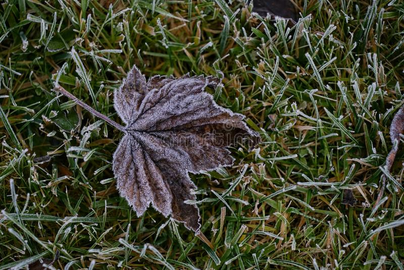A primeira geada à terra cobriu as folhas verdes frescas na manhã adiantada do outono Ato sazonal da natureza Começo da estação f imagem de stock royalty free