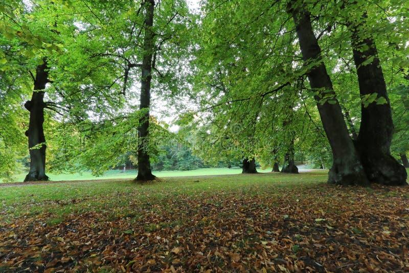 Primeira luz da manhã no parque em outubro imagem de stock