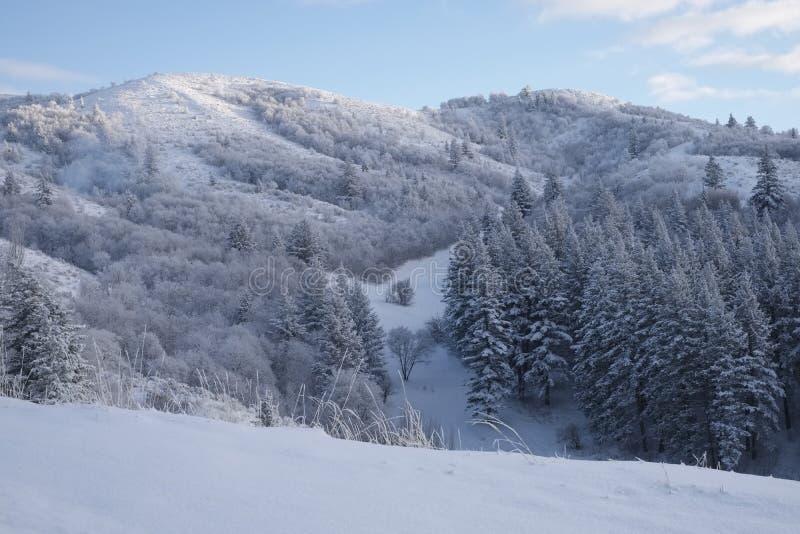 Primeira neve fotografia de stock royalty free