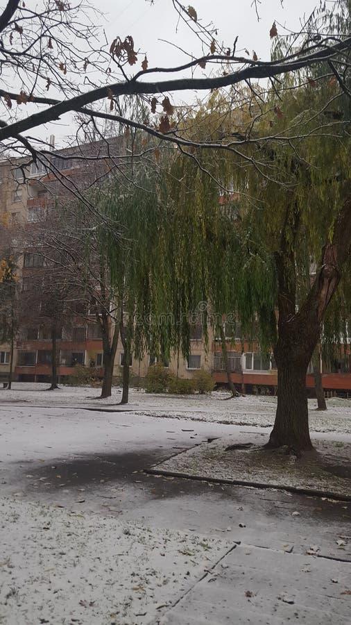 Primeira neve em Lituânia fotografia de stock