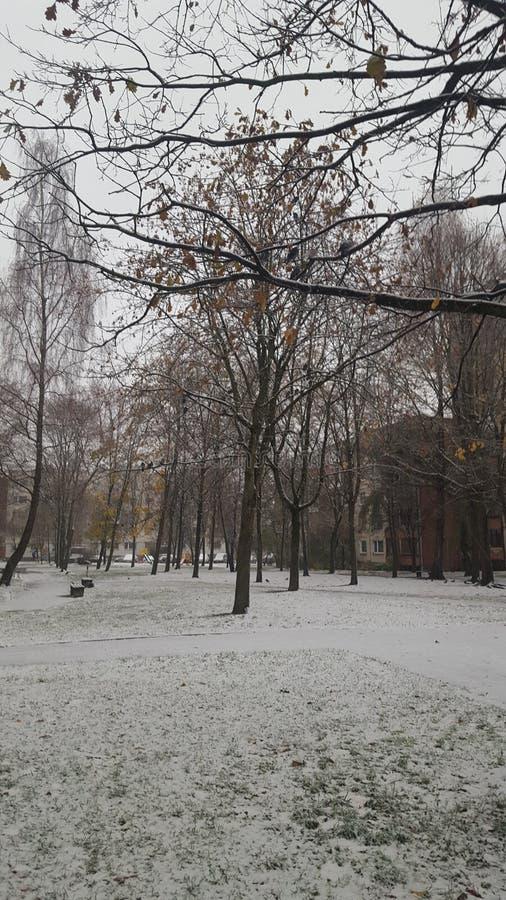 Primeira neve em Lituânia imagem de stock