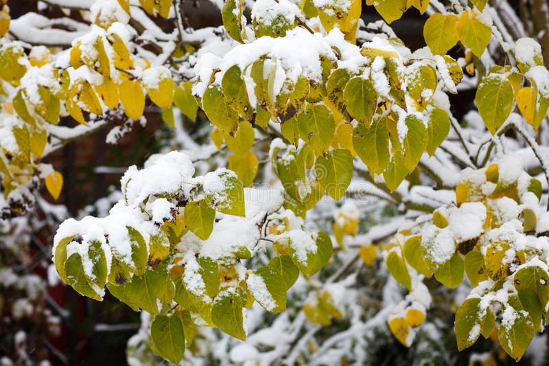 Primeira neve na floresta no outono foto de stock