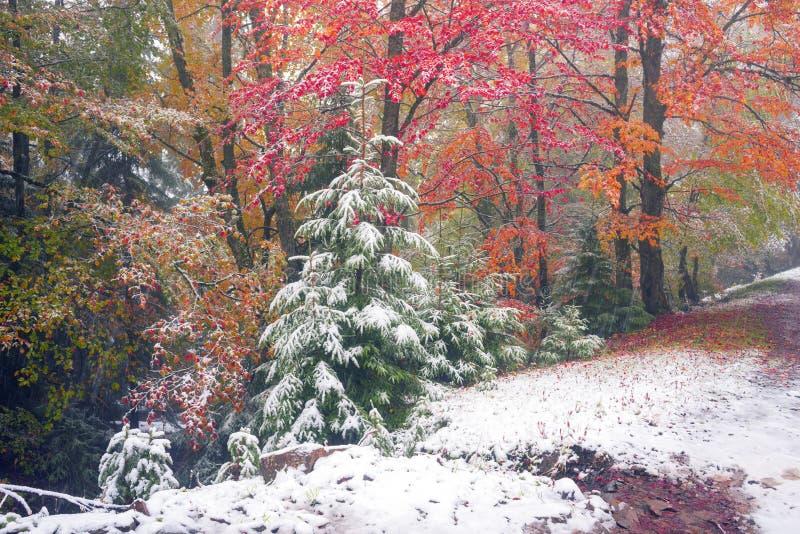 Primeira neve no outono imagens de stock