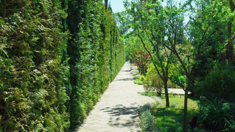Primeira pessoa vista Caminhada ao longo das ?rvores ao longo de um trajeto em um parque bonito em um dia de ver?o ensolarado imagens de stock