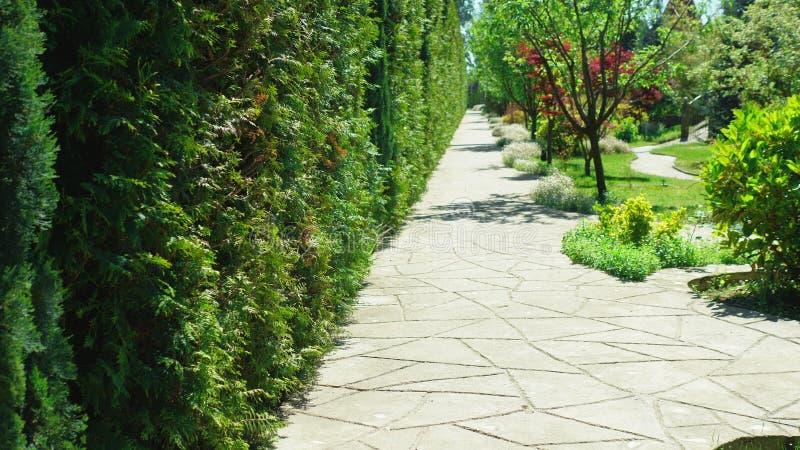 Primeira pessoa vista Caminhada ao longo das ?rvores ao longo de um trajeto em um parque bonito em um dia de ver?o ensolarado fotos de stock royalty free