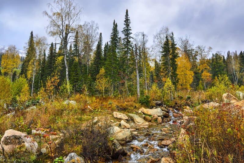 Primeira queda de neve em outubro na floresta montanhosa com riacho - paisagem de outono fotos de stock royalty free