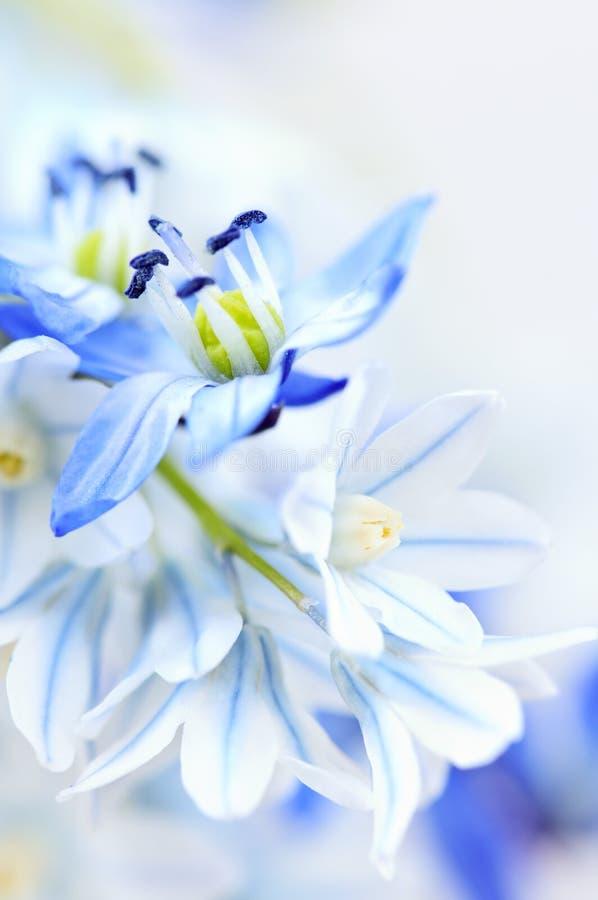 Primeiras flores da mola fotografia de stock