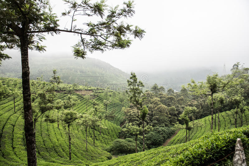 Primeiro parque nacional em Kerala fotografia de stock royalty free