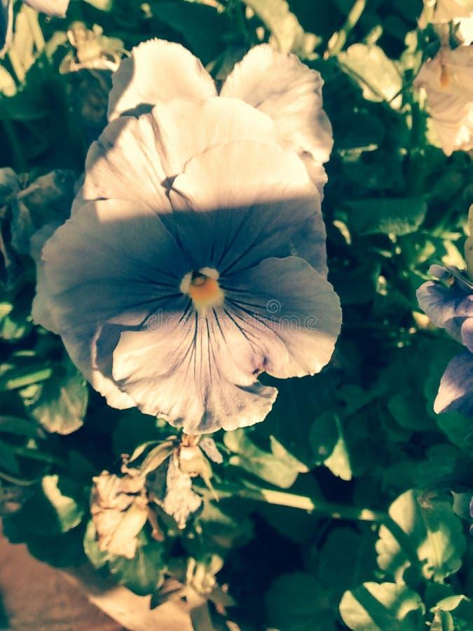 Primeiro plano da flor foto de stock royalty free