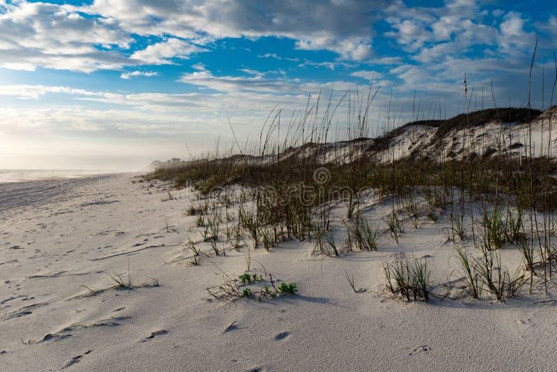 Primeiro sinal da mola em uma praia Windswept no Golfo do México foto de stock