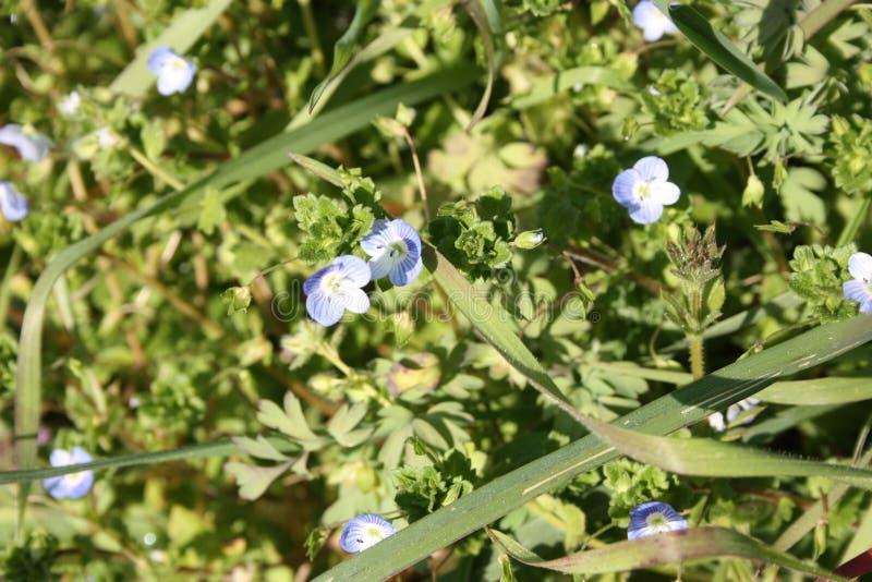 Primeiros frutos das flores A mola está vindo aqui as primeiras plantas da flor de março, a boa estação chegam imagem de stock royalty free