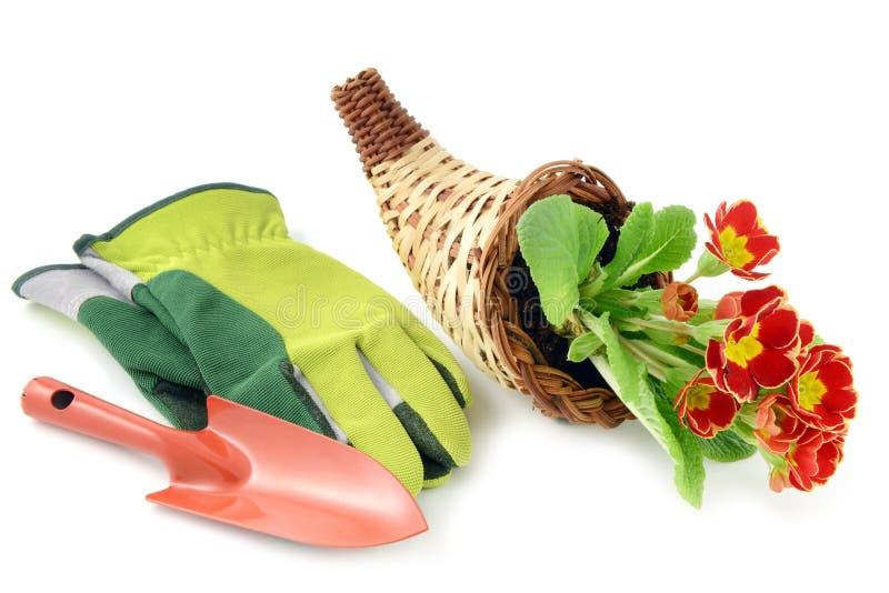 Primel eingemacht in der Fülle gardening lizenzfreie stockfotos