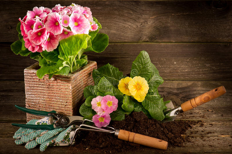Primel und Gartengerät stockbild