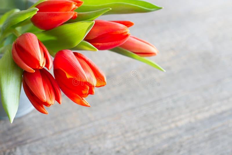 Primer abstracto del fondo de los tulipanes rojos de la primavera de Pascua fotografía de archivo