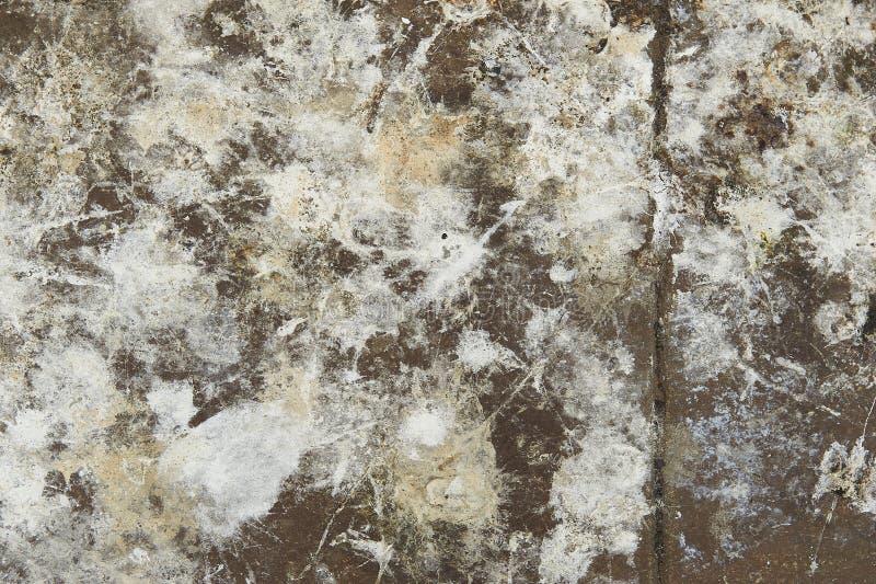 Primer abstracto del piso concreto salpicado con textura de la pintura foto de archivo