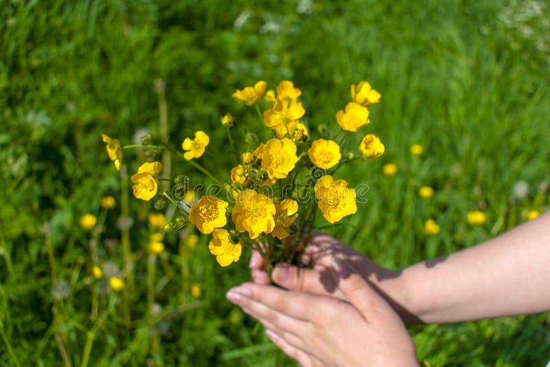 Primer amarillo de las flores a disposición con el fondo borroso fotos de archivo libres de regalías