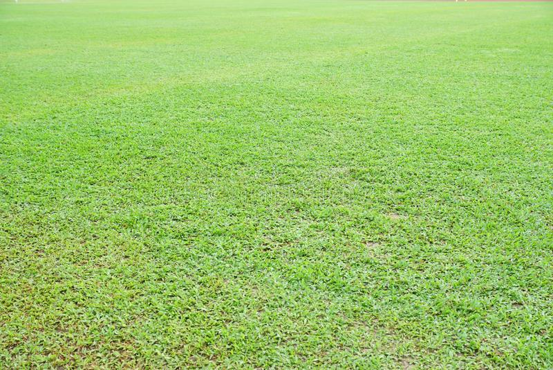 Primer asiático natural de la hierba verde de Overecposed por la mañana imagen de archivo libre de regalías