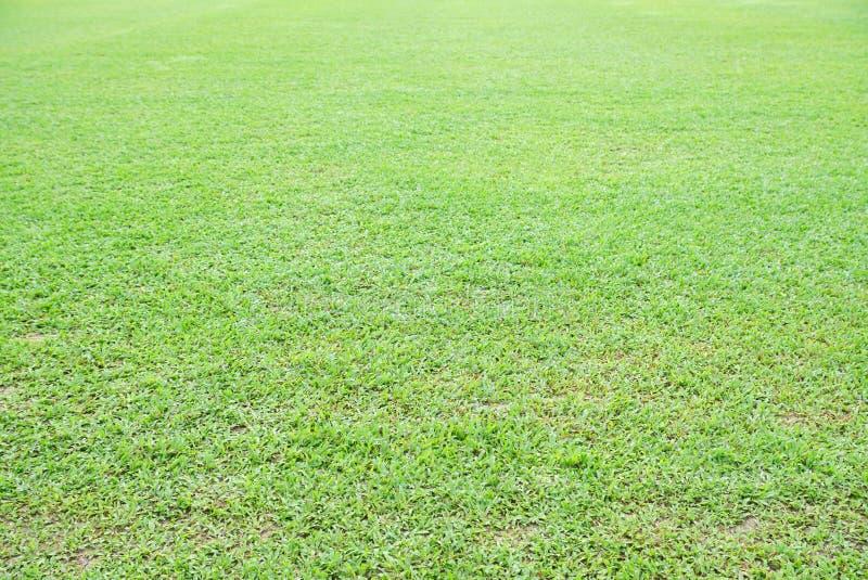 Primer asiático natural de la hierba verde de Overecposed por la mañana con el fondo blured del bokeh imágenes de archivo libres de regalías