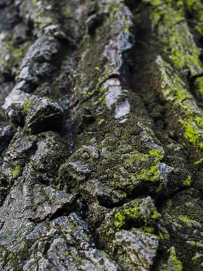 Primer asombroso de la textura del árbol foto de archivo