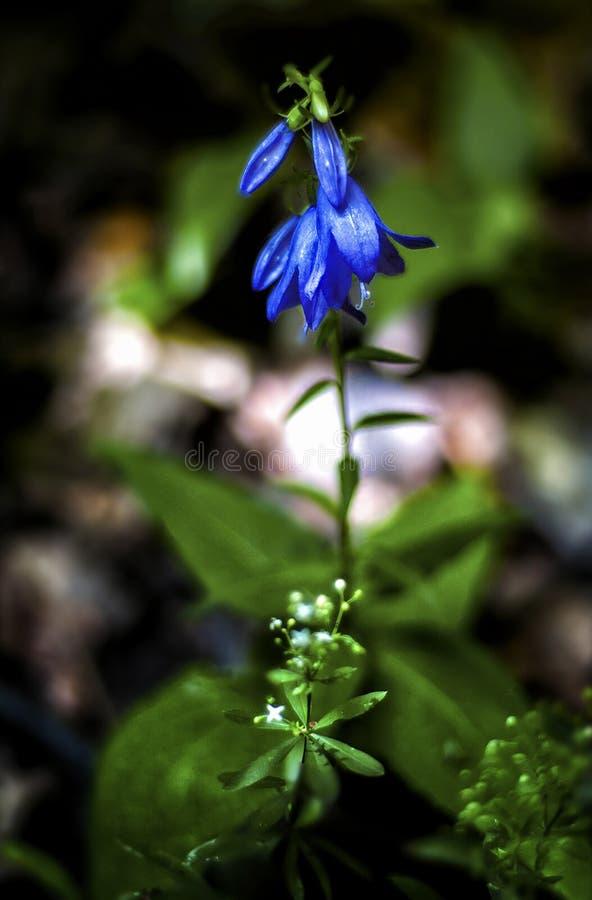 Primer azul de la flor con el fondo borroso de la naturaleza fotos de archivo libres de regalías