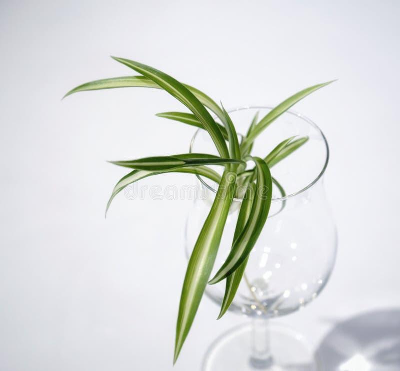primer blanco de la flor del verde de la copa del fondo foto de archivo libre de regalías