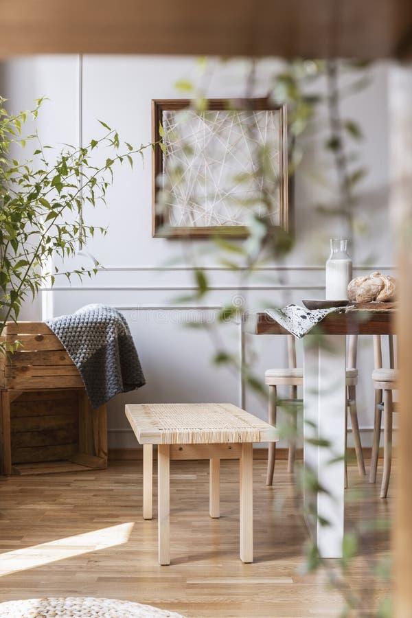 Primer borroso de una planta con un banco de madera en el fondo en un interior diario rustical del sitio Foto verdadera imagen de archivo libre de regalías