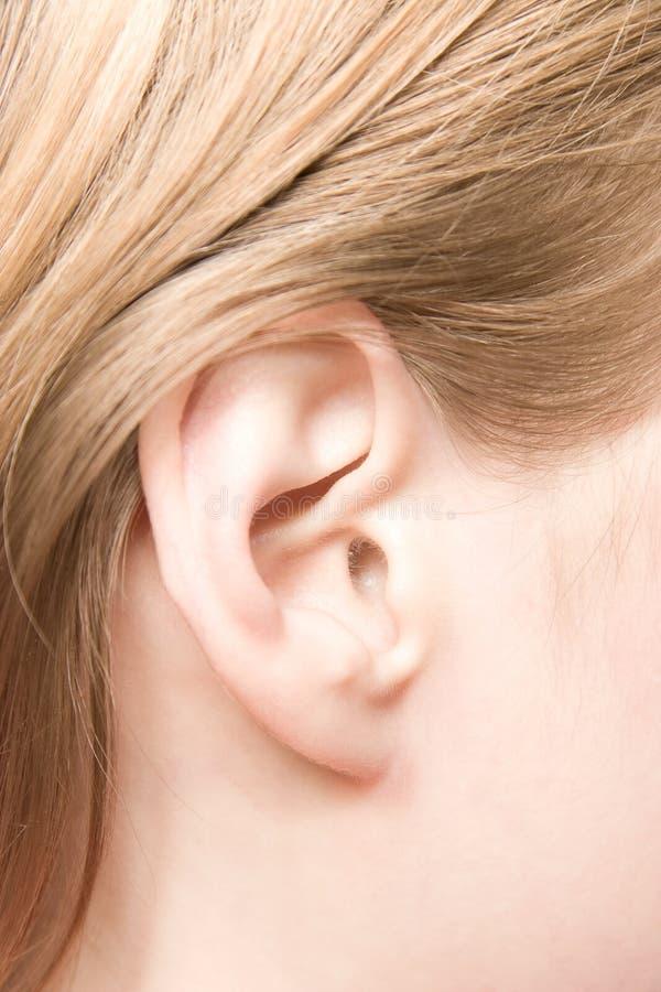 Primer caucásico joven del oído de la mujer fotos de archivo