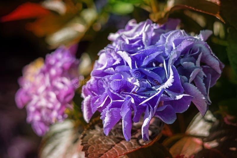 Primer colorido de las flores fotografía de archivo