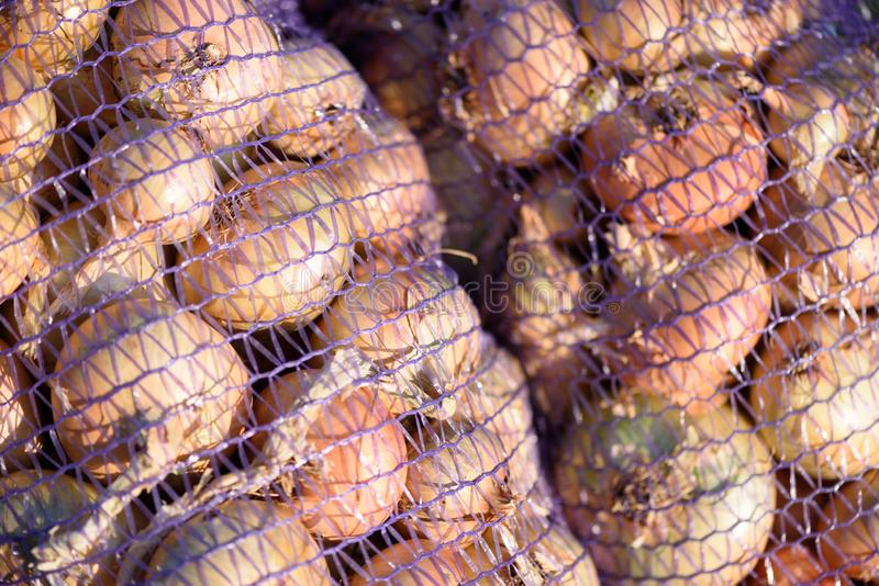 Primer de bolsos de cebollas en redes imagen de archivo