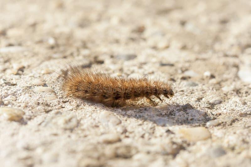 Primer de Caterpillar imagen de archivo