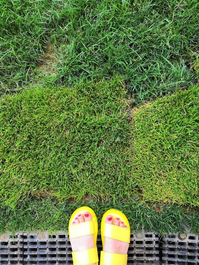 Primer de chancletas y de piernas amarillas brillantes en hierba verde fresca fotografía de archivo