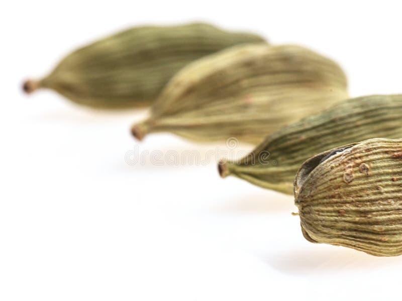 Primer de cuatro semillas del cardamomo imagen de archivo libre de regalías