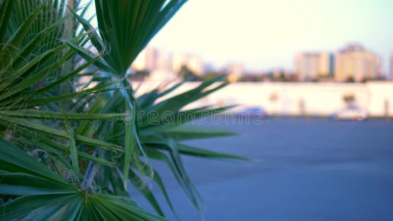 Primer de hoja de palma en el fondo de la ciudad moderna Bokeh en el fondo fotografía de archivo libre de regalías