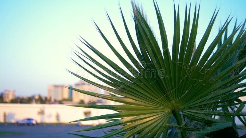Primer de hoja de palma en el fondo de la ciudad moderna Bokeh en el fondo fotos de archivo libres de regalías