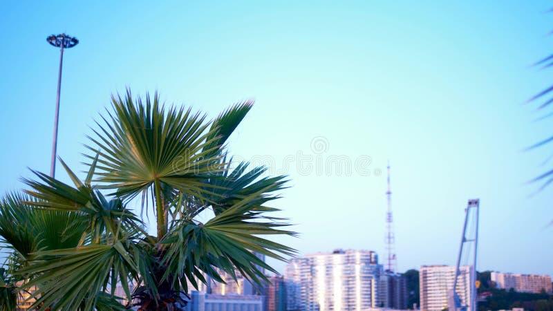 Primer de hoja de palma en el fondo de la ciudad moderna Bokeh en el fondo foto de archivo