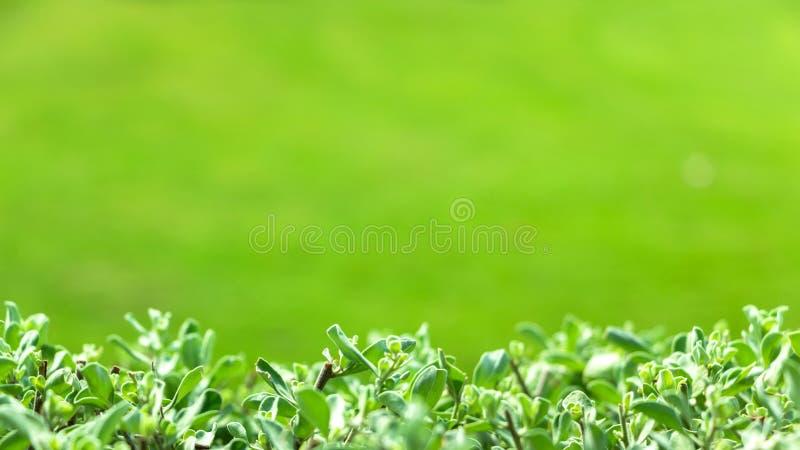 Primer de hojas verdes en un fondo verde borroso natural fotografía de archivo libre de regalías