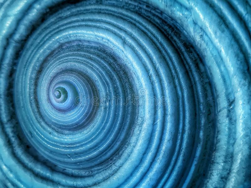 Primer de la cáscara del nautilus como modelo del fondo fotos de archivo