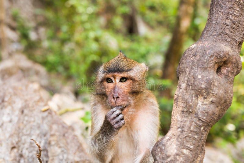 Primer de la cara del mono en un fondo de la naturaleza imagen de archivo