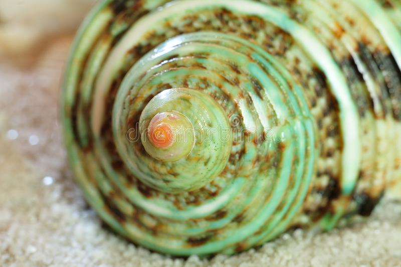 Primer de la casa colorida de un caracol del turbante imagenes de archivo