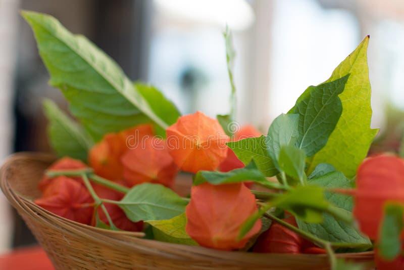 Primer de la cesta con la fruta fresca del physalis foto de archivo