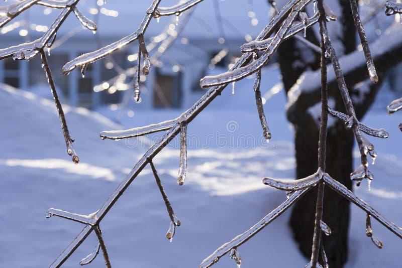 Primer de la extremidad de las ramas desnudas cubiertas en hielo después de tormenta de hielo en una luz azul de la mañana en inv foto de archivo