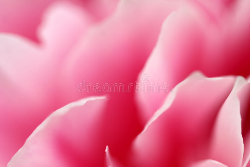 Primer de la flor fotografía de archivo