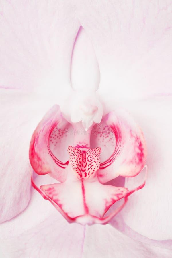 Primer de la flor de la orquídea fotos de archivo