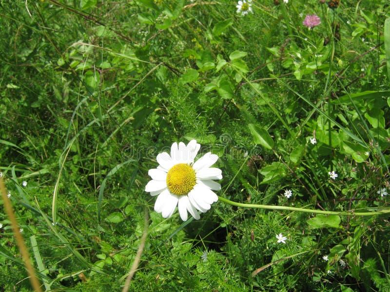 Primer de la flor en hierba fotos de archivo