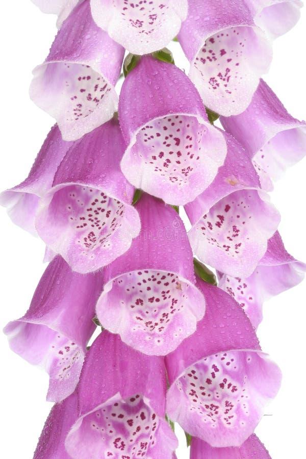 Primer de la floración de la flor foto de archivo libre de regalías