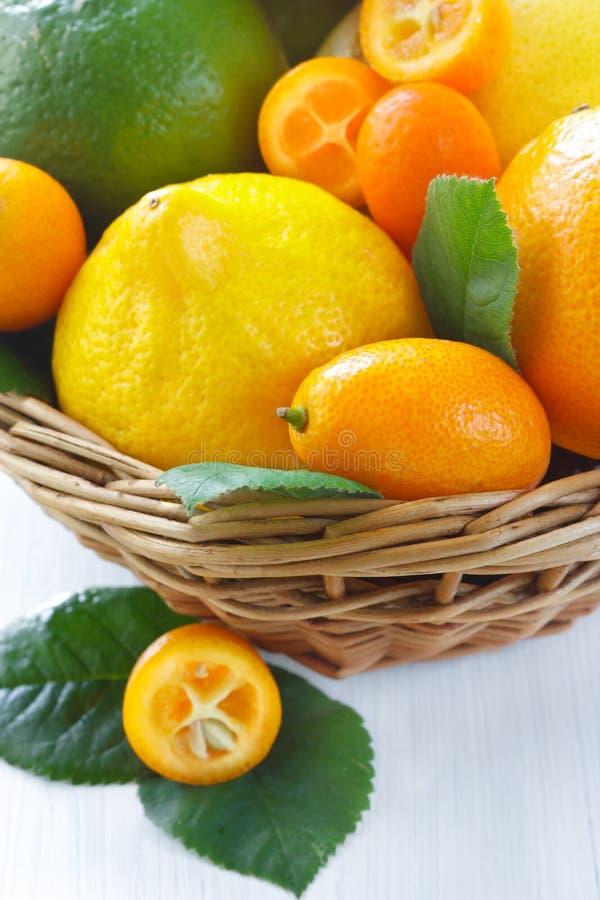 Primer de la fruta cítrica. foto de archivo libre de regalías